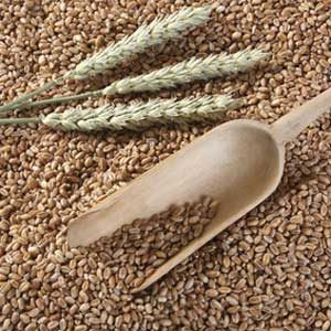 Bio - Weizen