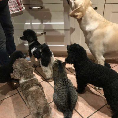 "Die 5-köpfige ""Hundetruppe"""