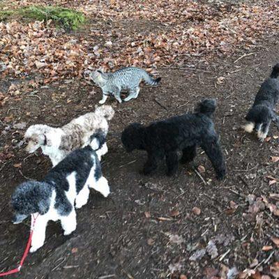 "Spaziergang mit der 5-köpfigen ""Hundetruppe"""