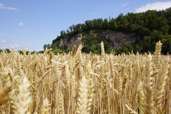 Welches Getreide wächst in Österreich?