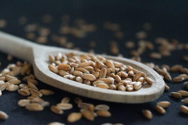 Was tun mit feucht gewordenem Getreide?
