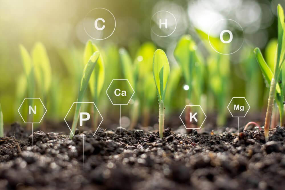 Wertvolle Mineralstoffe im Getreide