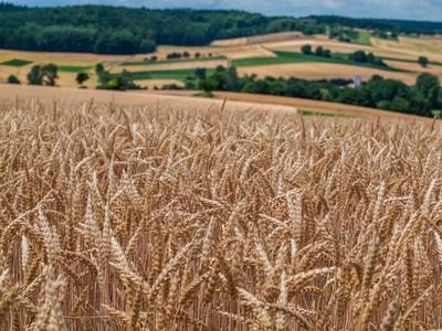 Welche Getreidesorten könnt ihr mit welcher Mühle mahlen?