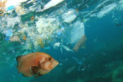 Überall Plastik - der Berti ist ganz aus dem Häuschen