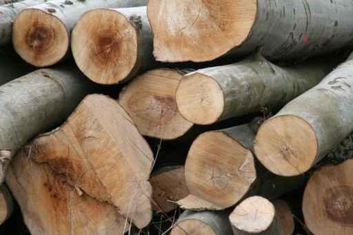 Warum Holz statt Kunststoff